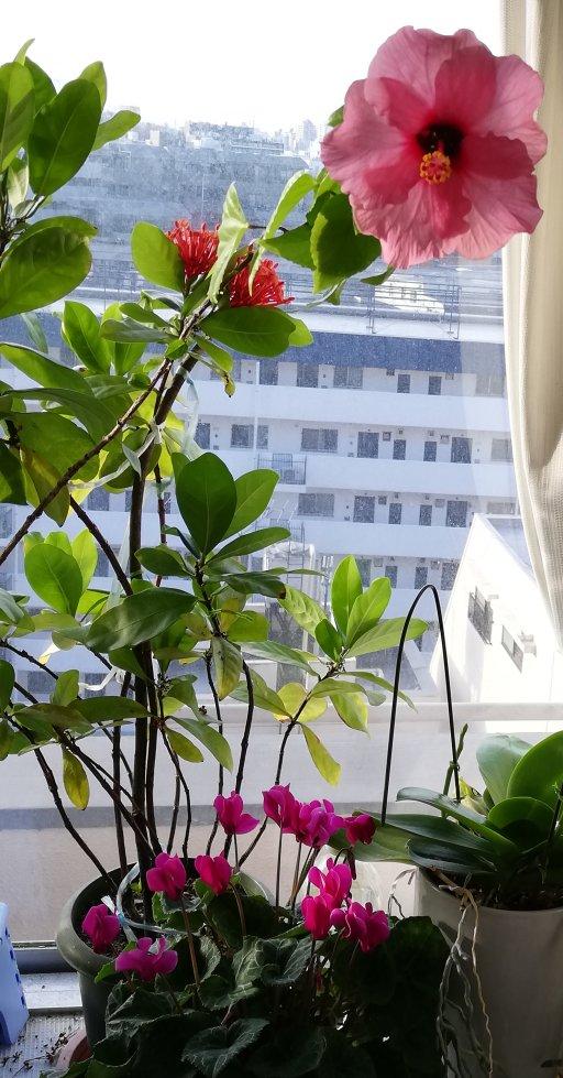南面の窓に夏冬ともに咲く花々