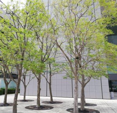 ビル風に立ち向かう樹木2